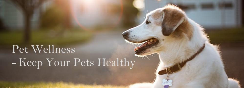 Healthy-pets-dogs-horses